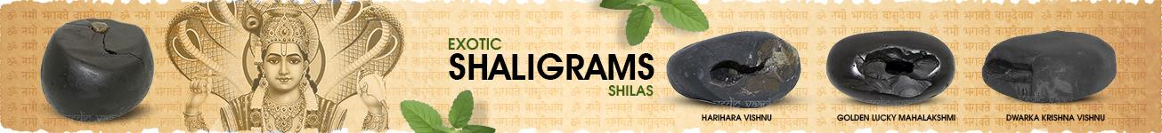 Exotic Shaligram Shilas